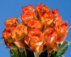 oranzines-rozes
