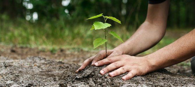 Tu BiSh'vat is Arbor Day
